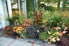 http://www.gardeninggonewild.com/wp-content/uploads/2011/08/DSC_0331.jpg