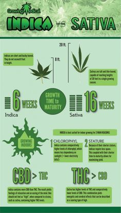 Growing pot marijuana Indica vs Sativa cannabis
