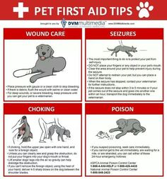Every responsible pet owner should be ready to administer basic pet first aid at any moment: Pet First Aid Tips Infographic Dog Health Tips, Pet Health, Health Care, Dog Care Tips, Pet Care, Pet Tips, Care Care, Diy Pet, First Aid Tips