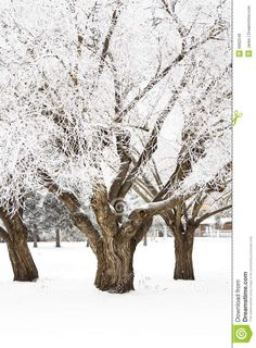 Hoar Frost Trees Royalty Free Stock Photos - Image: 6992548