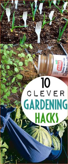 Top Hacks for your Vegetable Garden. Clever gardening hacks for beginners. Awesome ways to fertilize, plant and maintain your garden. Great ways to keep pests out of your garden and your plants moist.
