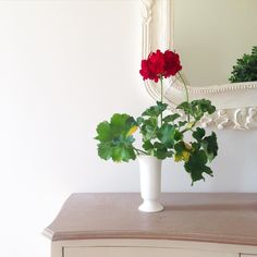 A simple red geranium in a white vase to decorate the entry.