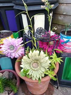 Uk Sweets, Candy Floss, Whimsical, My Love, Garden, Plants, Color, Lawn And Garden, Gardens