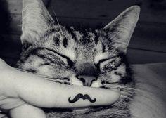 Jajaa pobre gatito XD