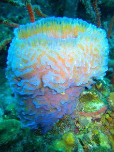 Magical sea sponge, Palau