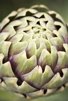 fresh looking artichoke: green with purple highlights | vegetable: artichoke . Gemüse: Artischocke . légume: artichaud |  Photo: Brian Haslam @ flickr |