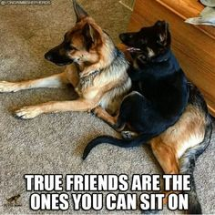 I suppose that makes me a true friend to my dog! #dogs #doglovers #funny #friendship