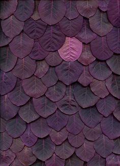 purple // leaves
