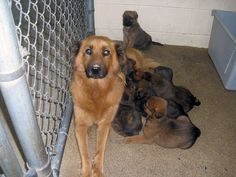 Chip in Link: http://thebeameroo.chipin.com/transport-and-vetting-for-fluffy-and-her-pups        We are trying to pull sweet Fluffy and her pups, but we need your help! Please contribute to their transport and vetting and this family will be on their way to safety!!    Thank you!    Im-Paws-Able Rescue —