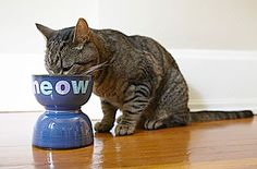 Have some old cereal or salad bowls you were thinking about getting rid of? Maybe your pet would enjoy a new food or water dish. http://www.homemadesimple.com/en-US/HomeOrganization/Pages/custom-pet-food-dish.aspx
