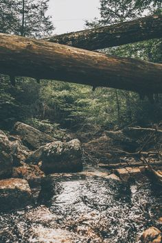New photography nature wanderlust woods Ideas Landscape Photography, Nature Photography, Travel Photography, Mountain Photography, Photography Women, Nature Sauvage, Misty Forest, Forest River, Adventure Is Out There