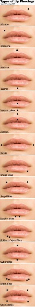 This image shows all of the different types of lip piercings