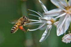 Os traemos un nuevo artículo acerca de la #alergiaalpolen. http://parafarmaciafilipinas.com/blog/que-hacer-si-se-tiene-alergia-al-polen