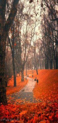 'Hello Autumn' Prague, Czech Republic by Kate Eleanor Rassia Hello Autumn, Autumn Fall, Autumn Leaves, Fall Mums, Late Autumn, Autumn Forest, Seasons Of The Year, Parcs, Belle Photo
