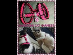 PARACORD DOG & CAT HARNESS - YouTube