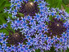 Blu Flowers Fiori Beautiful 2019 Immagini Nel Fantastiche Su 98 wqxIB8tHI