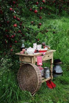 Rustic bar for apple wine