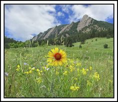 the flatirons  Chautauqua Park in Boulder, Colorado.