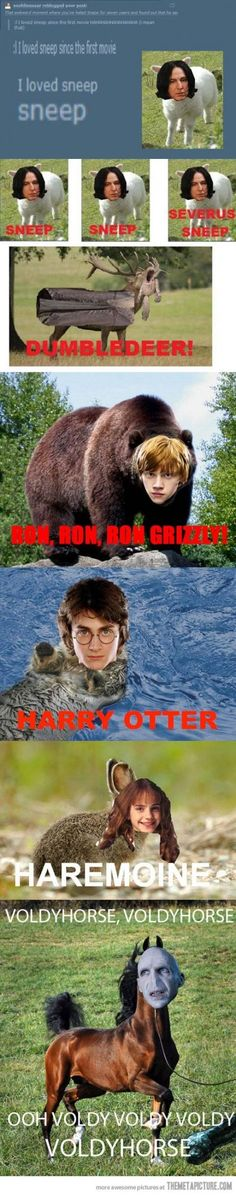 Funny pictures about Potter Animal Pals. Oh, and cool pics about Potter Animal Pals. Also, Potter Animal Pals. Mundo Harry Potter, Harry Potter Puns, Potter Puppet Pals, Harry Otter, Yer A Wizard Harry, Fantastic Beasts, Fangirl, Funny Pictures, Hilarious