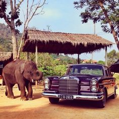 Mercedes Benz S220 Making a friend in Thailand in the classic 1964 220 S.