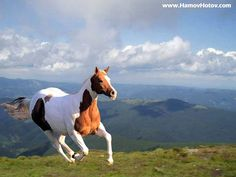 White And Brown Running Horse