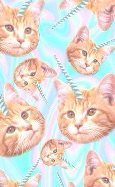 Cats & Unicorns wallpaper | lockscreen | papel de parede | plano de fundo | background | gato | unicórnio | pastel