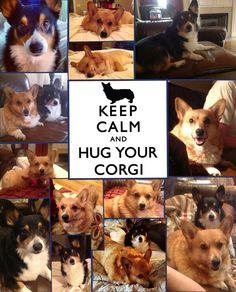 Corgis rule