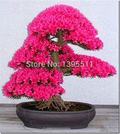 10 шт./лот японский sakura семена, Бонсай цветок вишни цветет бесплатная доставка декоративные завод купить на AliExpress
