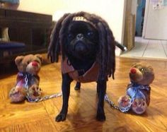 Best Walking Dead pug costume ever.