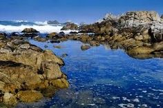 Asilomar State Beach in Pacific Grove, CA (midway up coast)- cool tide pools.  Monterey Bay is close by, too, which has a cool aquarium with an open-sea aquarium that lets marine life come and go from the sea to be observed.