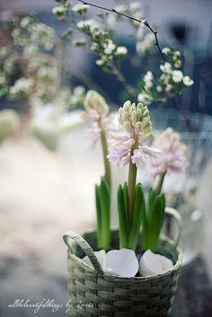 It's Spring! | Flickr - Photo Sharing!