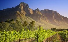 Picture: Vineyard in Franschhoek, South Africa?World Tourist Hot Spots , Worldwide Beautiful Scenery, High resolution Windows 7 Wallpapers of Famous Tourist Destinations in World, Scenery and landscapes of tourist attractions around the world South Africa Facts, South African Wine, African Countries, Africa Travel, Wine Country, Cape Town, Monument Valley, Beautiful Places, Beautiful Days