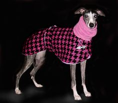 Dog Coats, Whippet Coats, Greyhound Coats- Posh Pawz