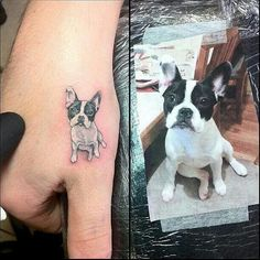 I could maybe see me doing this style. Oh, who am I kidding, I would faint. Pied French Bulldog tattoo on hand.