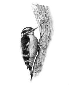 Bird Pencil Drawing, 3d Pencil Drawings, Art Drawings Sketches Simple, Animal Sketches, Bird Drawings, Realistic Drawings, Animal Drawings, Texture Drawing, Drawing Techniques