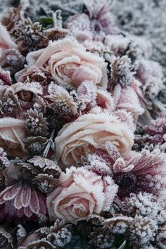 Love this Texture, frosted flowers. Makes me want to design a textile print of it.