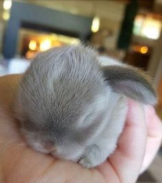 So so so so sooooo cute little baby bunny❤️❤️❤️❤️