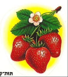 Strawberry | by Huge Cool Strawberry Fields Forever, Strawberry Garden, Strawberries, Flower Art, Decoupage, Craft Ideas, Fruit, Tattoos, Crafts