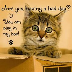 Kittens and boxes