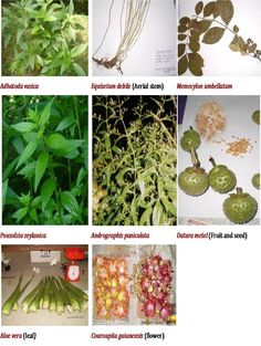 research papers on antioxidant activity of medicinal plants