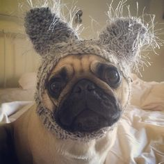 Mum put my koala hat on this morning hoping you'd think I was an Easter Bunny says Mabel.. How embarrassing.. Happy Easter folks .... Hope you all have a fabulous weekend........... #goodmorning #friday #easter #weeklyfluff #pugmob #pugnation #zerozeropug #puglove #smilingpugs #pugrequest #flatnosedogsociety #TheTomCoteShow #pugsandkisses #puglife #insta_dogs #sendadogphoto  #pug #lacyandpaws #speakpug #pugsofinstagram #pugs #pugsproud_feature #dogs #pugsloversclub #cutepugsonly #cutepugs…