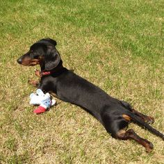 Homer enjoys a good afternoon basking in the sunlight!