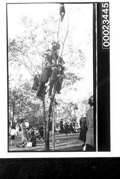 Six men up a tree overlooking a crowd of people, 1890-1930: Samuel J. Hood Studio collection.