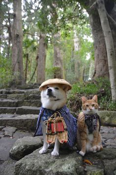 Shiba Inu and cat. Such friends. Much cute. - off on travels in very eclectic outfits!