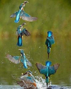 #birds #bird #amazing #nature #natureza #lovenature #naturelovers #naturelover#photograph #photography #photogrid #photogram #photo #nicepic #explore # #wander #wonderful #fantastic#natureshots#naturegram#nature_perfection http://tipsrazzi.com/ipost/1518384298272276631/?code=BUSYnl7DMCX