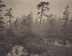 Le foreste e le distese d'acqua della regione di Okkaido e gli immensi spazi dello Yosemite national park, ma anche i parigini Jardin du Luxemburg e Central Park, il cuore verde di New York. Fino ad arrivare alla misteriosa isola scozzese di Skye. Il fotografo giapponese Takeshi Shikama si concentra