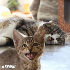 From @macchacat: Maccha is spending the day relaxing YO IMMA LET YOU FINISH BUT KEANU IS THE CUTEST KITTEN OF ALL TIME.  Keanu interrupts this post to tell you all to check out @keanumovie - in theaters April 29! #catsofinstagram #keanu #sponsored [source: http://ift.tt/24fZ6Qa ]