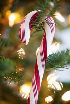 Check Out 17 Candy Cane Decor Ideas For Christmas. Candy canes are cool and tasty Christmas symbols that always remind of the holidays and bring a strong Christmas feel. Merry Little Christmas, Noel Christmas, Country Christmas, Winter Christmas, All Things Christmas, Vintage Christmas, Christmas Bulbs, Christmas Crafts, Xmas