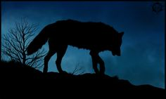 They do not have much to do with other wolf packs besides the Frost wolves, however they are generally friendly towards outsiders. Description from deviantart.com. I searched for this on bing.com/images
