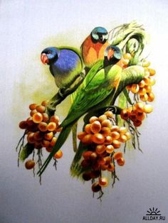 Три попугайчика, оригинал